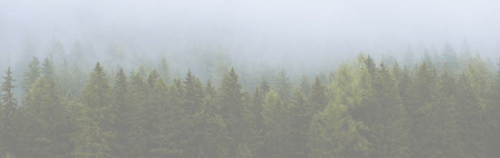 Evergreen content: what, why and how?